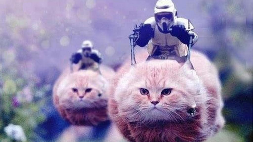 _86825678_cats9